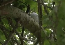 Ball in tree